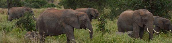 Olifanten spotten in Tanzania!