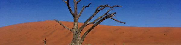Tijd en kosten bespaard voor onze Namibie reis